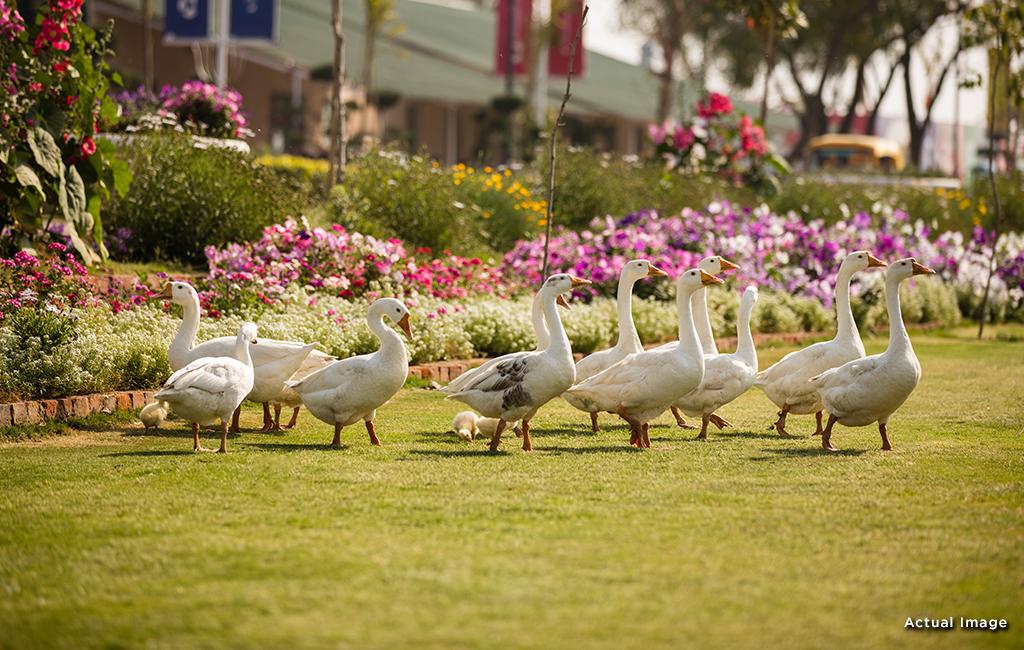 modern home greenry central park flower valley
